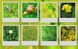 Imagens bonitas das flores e dos animais Imagem de Stock Royalty Free