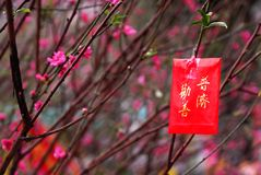 Imagens chinesas do ano novo Fotografia de Stock Royalty Free