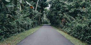 Imagens da natureza rural, com as florestas à direita e esquerdo, imagens das estradas na vila, com natureza verde fotografia de stock royalty free