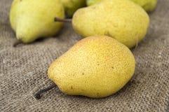 Imagens das imagens da pera do inverno, as naturais e as orgânicas do inverno da pera Imagens de Stock Royalty Free