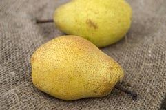 Imagens das imagens da pera do inverno, as naturais e as orgânicas do inverno da pera Fotos de Stock Royalty Free