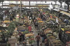 Imagens de Brasil Os povos e as terras brasileiras imagem de stock royalty free