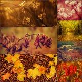 Imagens do outono ajustadas Imagens de Stock Royalty Free