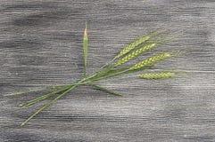 Imagens do ponto do trigo do verde da qualidade superior para projetos do trabalho e de projeto da amostra Imagem de Stock Royalty Free