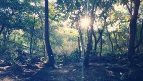 Imagens do por do sol da selva de Junagadh Girnar Fotografia de Stock Royalty Free