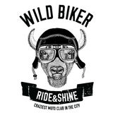 Imagens do vintage do búfalo, bisonte, boi para o projeto do t-shirt para a motocicleta, bicicleta, velomotor, clube do 'trotinet Fotografia de Stock Royalty Free