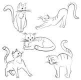 Imagens dos gatos Imagem de Stock
