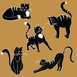 Imagens dos gatos Fotos de Stock