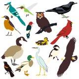 Imagens gráficas dos pássaros Fotos de Stock Royalty Free