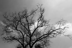 Imagens preto e branco, árvore, nuvens e céu fotografia de stock