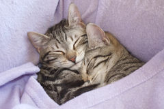 Images of cats. Cats sleeping in the bed Stock Images