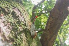 Images d'insecte de lanterne Images stock