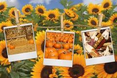 Images de moisson d'automne sur le film Photos libres de droits