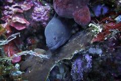 Sous la vie de l'eau Photos stock