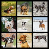 Images with domestic dogs Stock Photography