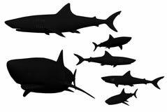 Images droites de requin Image stock