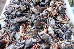 Images en gros plan de beaucoup de crabes colorés, conserves au vinaigre noires, sel sur le marché de fruits de mer image libre de droits