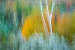Fall trees blurs. Royalty Free Stock Image