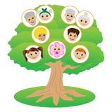 Images of family on genealogical tree Stock Photo