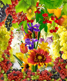 Images of flowers and fruits in the garden close-up Stock Photo