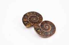 Images fossilisées d'actions d'ammonite Photographie stock libre de droits