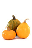 Images of fruits of the pumpkin Royalty Free Stock Photo