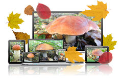 Images of mushrooms are on the screens of computer technology. Stock Image