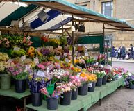 Flower stall and forest seen in an English market town. stock photography