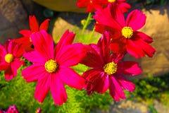Images Tha?lande de fleur photos libres de droits