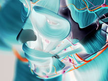Images thermiques de tête humaine Image libre de droits