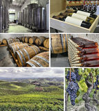 Images of winemaking Stock Photography