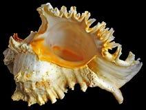 Imaginação do mar. Fotografia de Stock Royalty Free