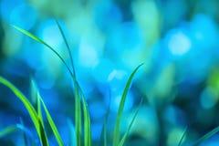 Imagination, abstraction d'herbe dans la forêt pendant le début de la matinée Photos stock