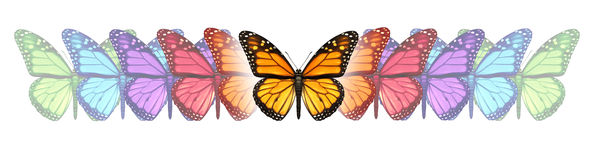 Imagination Freedom. With a monarch butterfly changing and going through a color transformation and evolution as a concept of free expression creativity and Royalty Free Stock Image