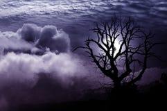 Imagination solitaire d'arbre images stock