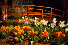 Imaginative Landscape Design Royalty Free Stock Photo