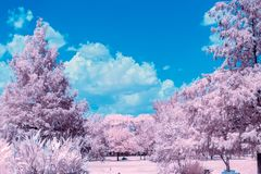 Infrared Image Trees In The Park. Imaginative view of trees in a local park on a hot summer day royalty free stock image