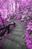 Imagine Pink forest with stair Royalty Free Stock Image