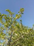 Imaginez juste les arbres photographie stock