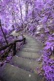 Imaginez la forêt pourpre avec l'escalier Photographie stock libre de droits