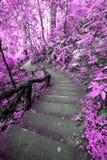 Imaginez la forêt rose avec l'escalier Image libre de droits