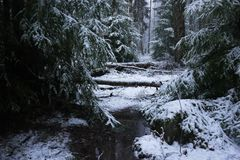 Snow falls in the forest with trees. Intense snow instantly covers the surface of the forest and tree branches with a layer of sno stock photos