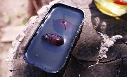 Beetle inside transparent plastic. Details and close-up. 