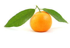 Imandarin on isolated. Tangerine isolated on a white background Royalty Free Stock Photography