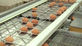 Imballaggio del pollo della fabbrica dell'uovo archivi video