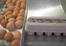 Imballaggio del selezionatore dell'uovo Fotografia Stock Libera da Diritti