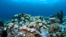 Imbianchimento di corallo Immagini Stock Libere da Diritti