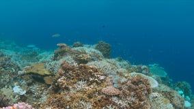 Imbianchimento di corallo Immagine Stock Libera da Diritti