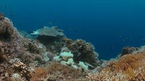 Imbianchimento di corallo Fotografie Stock