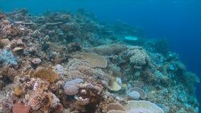 Imbianchimento di corallo Fotografia Stock Libera da Diritti